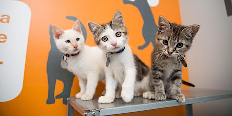 KITTEN YOGA BY YOGA TO THE PEOPLE tickets