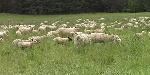 Pastures for Profit Grazing School