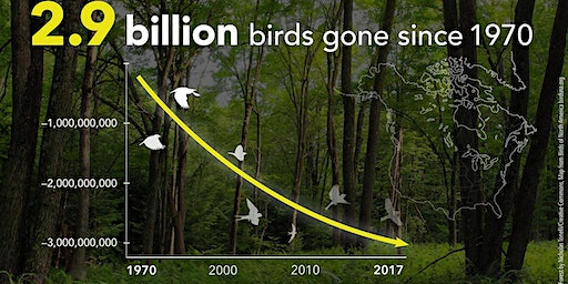 Gone Missing - 3 Billion Birds:   A Panel Discussion with Birding Experts
