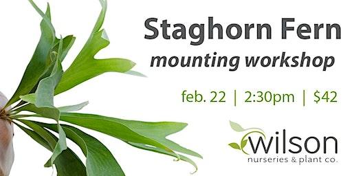 Staghorn Fern Mounting Workshop
