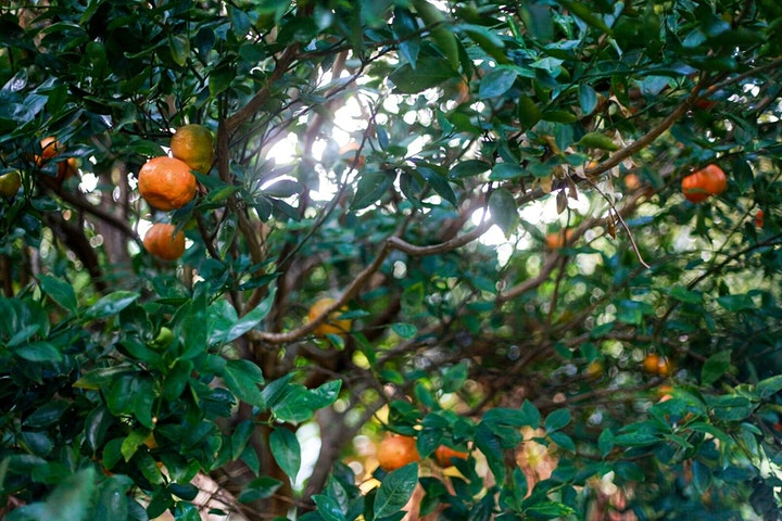 Tropical Food Forest + Plant Medicine Tour image