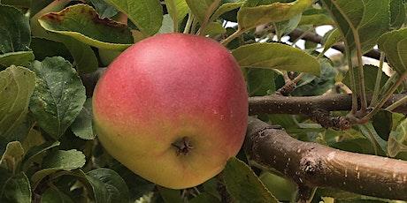 Winter Fruit Tree Pruning tickets