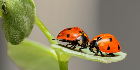 Love Bugs tickets