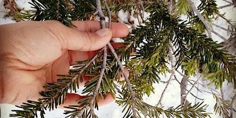 Winter Plant Identification Walk tickets