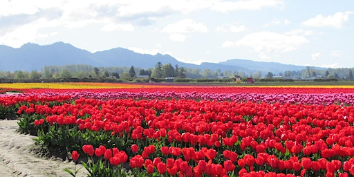 PAWA Paint the Skagit River/Tulips 2020