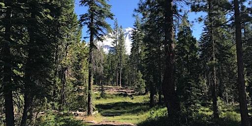 Mt Shasta Retreat