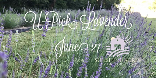 U-Pick Lavender- Ticket Required