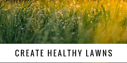 How to Create a Healthy Lawn