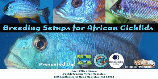 Breeding Setups for African Rift Lake Cichlids with Josh Cunningham