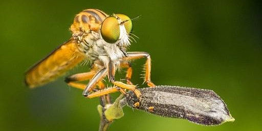 Get snapping! Insect macro photography workshop at Mary Cairncross