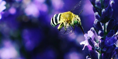 Bees, pollination and sustainability -  Educator Professional Development Workshop tickets