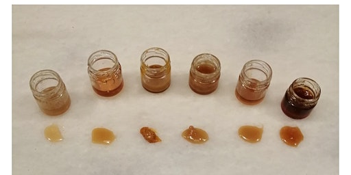 Greek Honey Tasting
