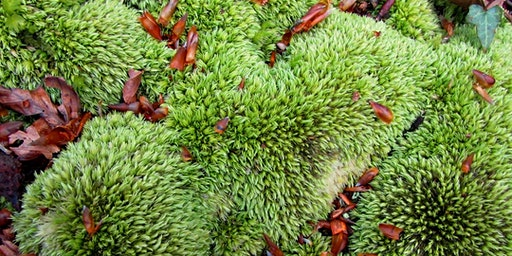 Mosses and Liverworts on Trees Identification Workshop