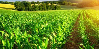 Traceability And Phytosanitary Standards In Agriculture Course