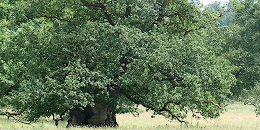Ancient Trees Workshop