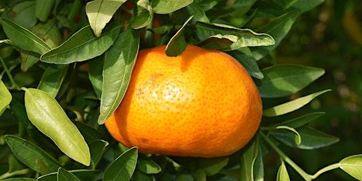 2020 Citrus Health Forum Sponsorship