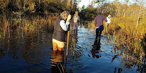 Pop Up Event - Swamp Tromp at Hungryland Slough Natural Area