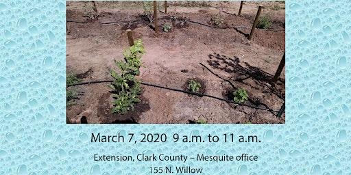 Drip Irrigation 2020 – Mesquite
