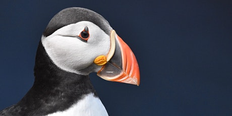 *Postponed* Coastal seabirds - what Scotland does best tickets