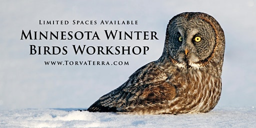 Photo Tour - Winter Wildlife of Minnesota