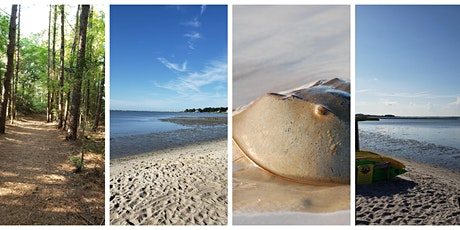 Horseshoe Crabs and Inland Bays Discovery tickets