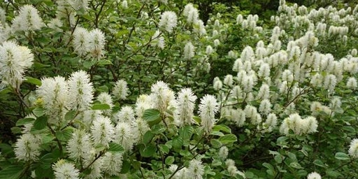 Encouraging and Planting Natives Following Removal of Invasives