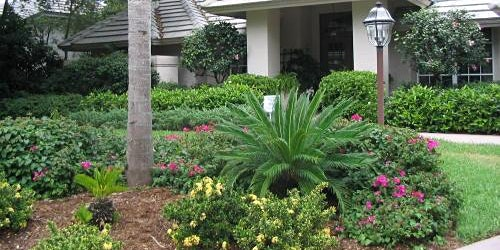 Florida Friendly Landscaping™ for Homeowners Workshop 2020