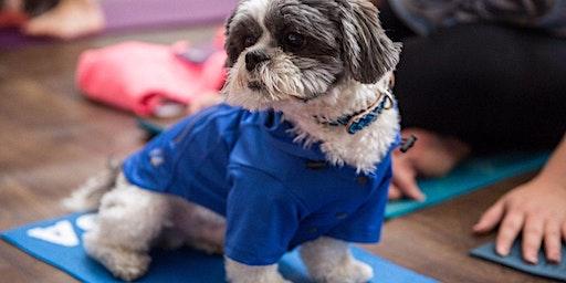 FKD Doga (Yoga with your dog!)