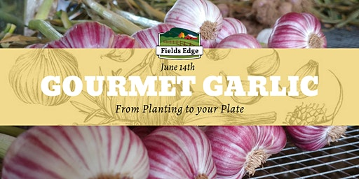 Gourmet Garlic: From Planting to Your Plate