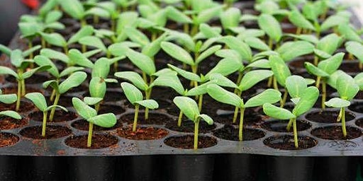 Propagation 101 - How to Grow from Seeds, Roots and Cuttings