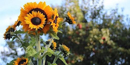 Wildmoon Homesteading Women's Gardening Apprenticeship
