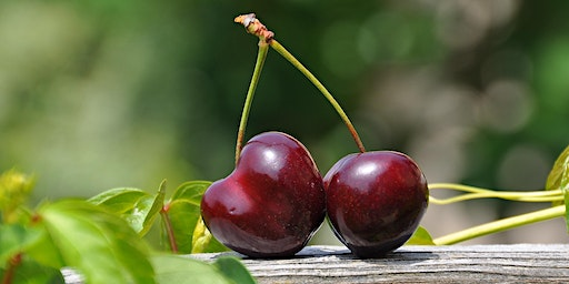 Cherry industry market insights