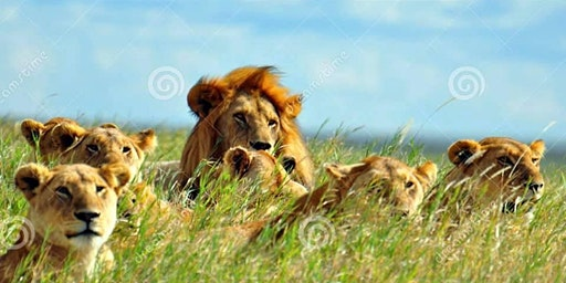 5M7 LIONS Safari EXPO!