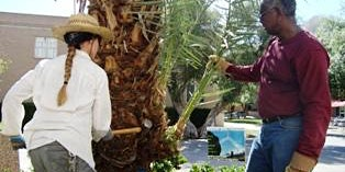 ASU Arboretum Date Palm Workshop