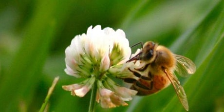 Brief Introduction to Keeping Honey Bees - October 10, 2020 tickets