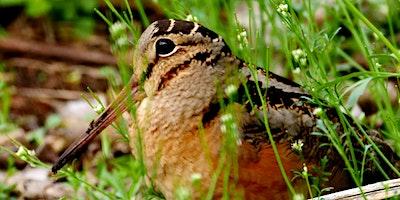 PARD Spring 2020 Birding Basics class