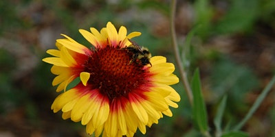 The Grow Project- Growing Native Plants to Promote Pollinators & Wildlife