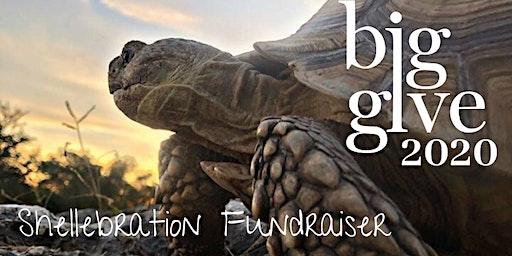 Shellebration Fundraiser #BigGive2020