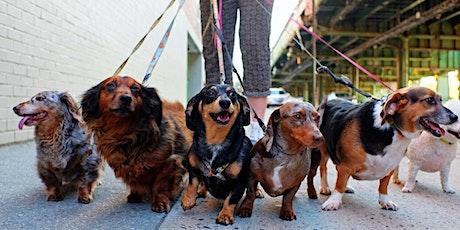Bushfire Fundraiser - Doggie Walk and BBQ tickets
