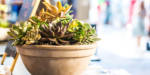 Succulent Bowl Workshop @ Halo & Grace