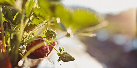 Berry Industry information day tickets
