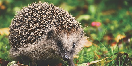 Wildlife Exchange Session -  Chester Zoo Hedgehog Project tickets