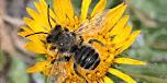 Pollinator Gardening  - 2020
