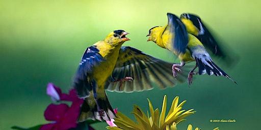 Artistic Bird Photography Workshop