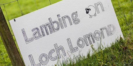 Lambing - Half Day Experience tickets