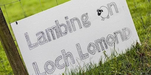 Lambing - Half Day Experience