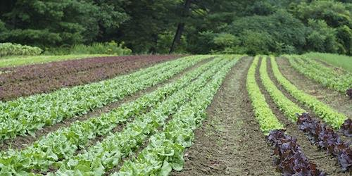 No-Till Management for Vegetable Producers