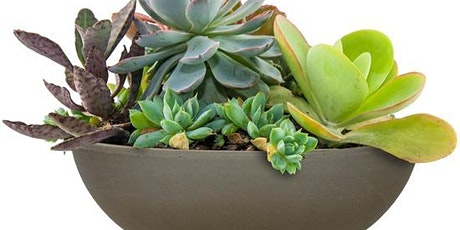 Plant Your Own Succulent Bowl tickets