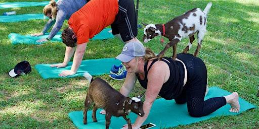 Goat Yoga Public Events- February 8th, 2020