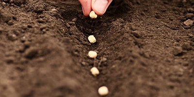Starting Seeds & Transplants